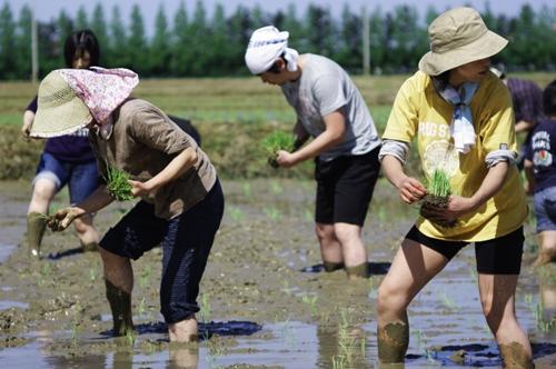 金沢大地の2010年5月15日田植えイベント