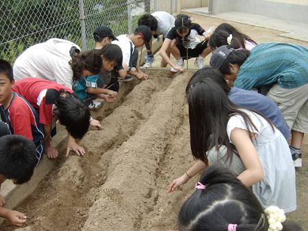 青葉小学校で幸運の大豆